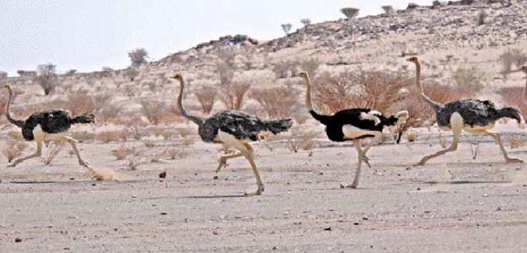 Photo of أجمل المحميات الطبيعية في السعودية