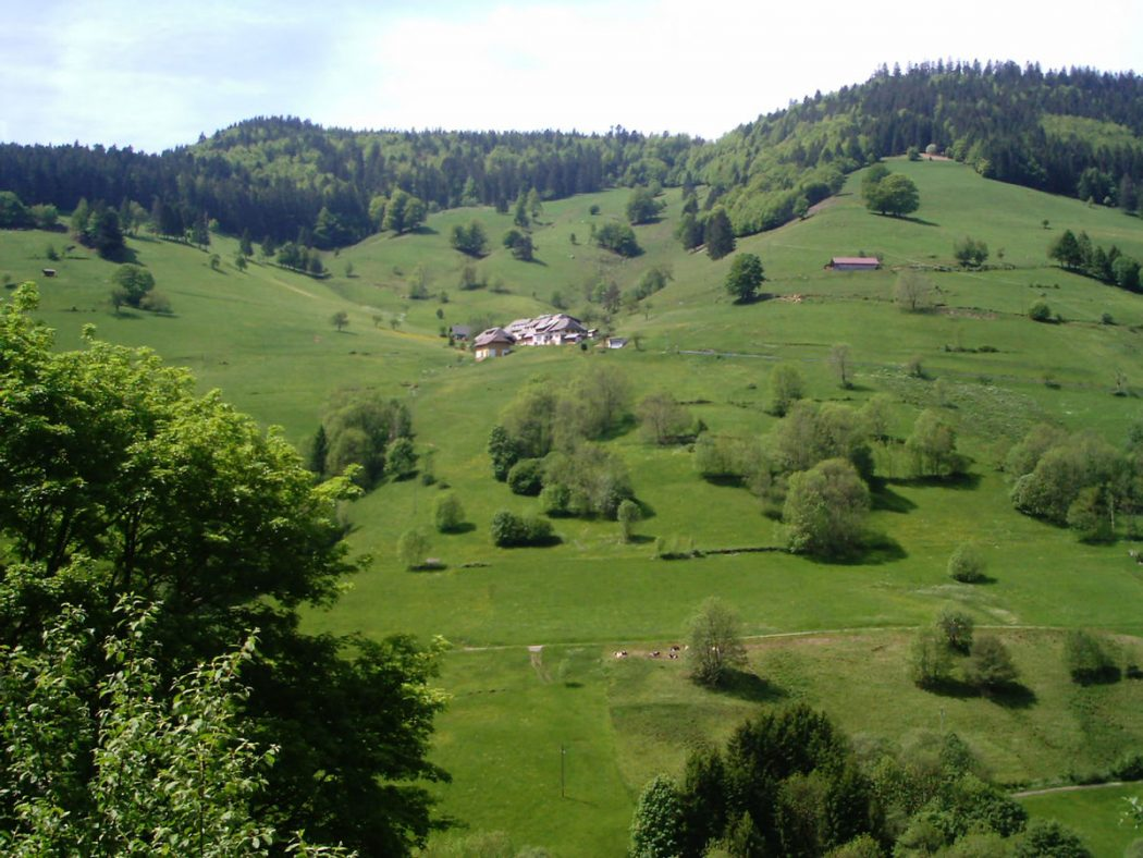 Photo of رحلة الي الغابة السوداء أجمل المناطق السياحية في أوروبا
