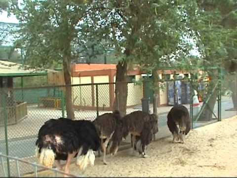 Photo of حديقة الحيوان بالكويت اسعار الدخول والمواعيد