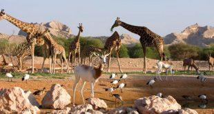 حديقة حيوانات العين