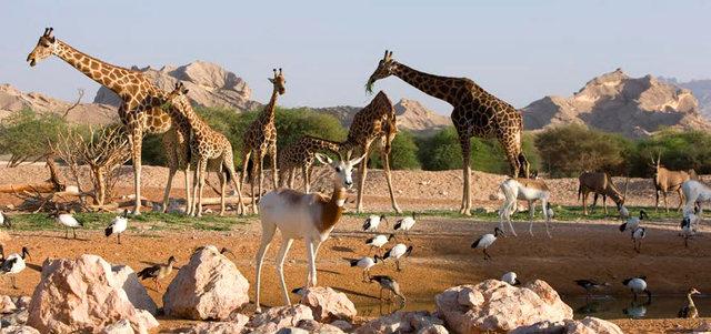 Photo of حديقة حيوانات العين بالصور واهم الأنشطة