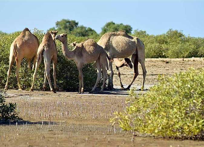 Photo of محمية وادي الجمال وأهم الأنشطة السياحية