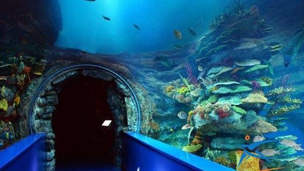Photo of متحف الأحياء المائية l تعرف علي أسرار المتاحف البحرية .. أشهر مواقع سياحية بمدينة الإسكندرية