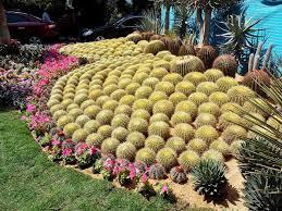 Photo of معرض الزهور بحديقة الاورمان 2021