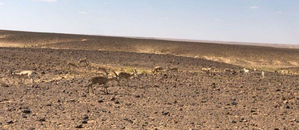 Photo of أهم الأنشطة الترفيهية في محمية الخنفة
