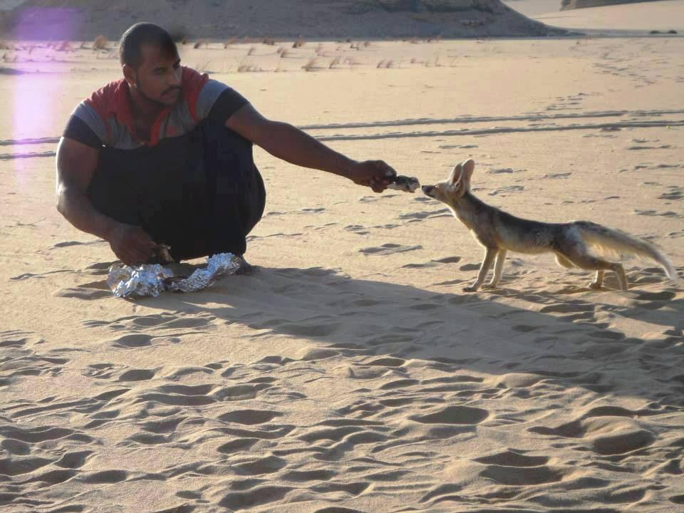 Photo of الأنشطة السياحية في محمية العميد