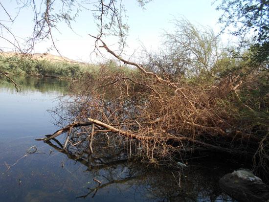 Photo of أهم الأنشطة في محمية سالوجا وغزال