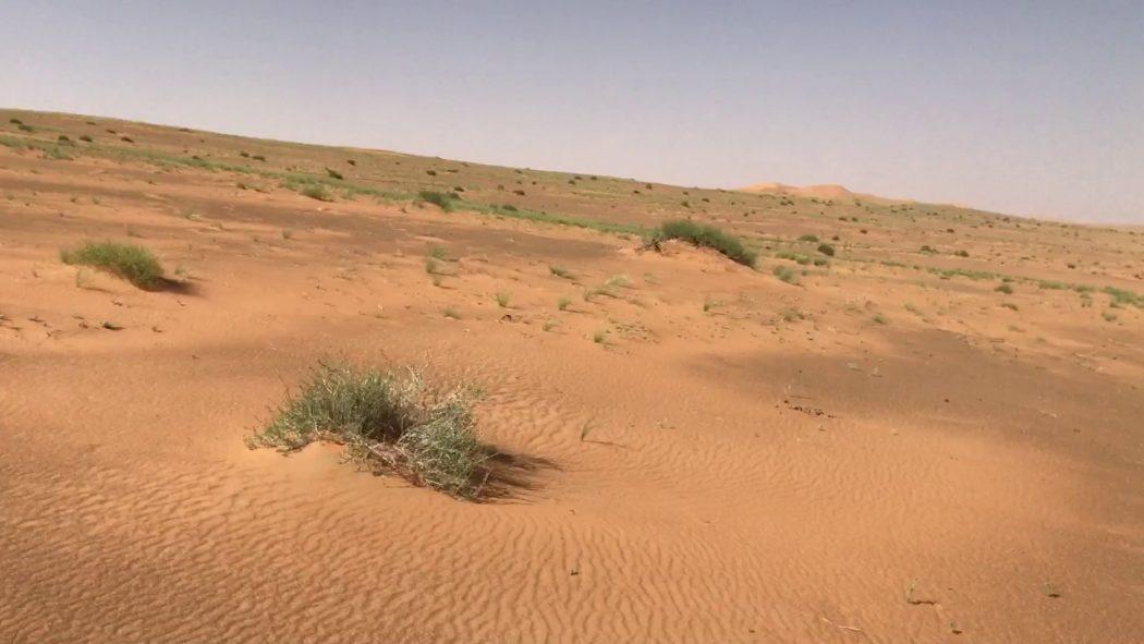 Photo of أهم الأنشطة الترفيهية في محمية عروق بني معارض