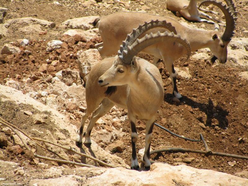 Photo of أهم الأنشطة السياحية في محمية الوعول