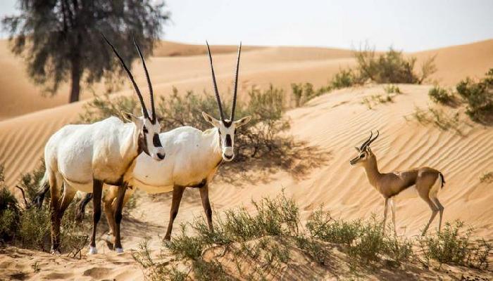 Photo of أفضل أنشطة ترفيهية في محمية دبي الصحراوية الإمارات