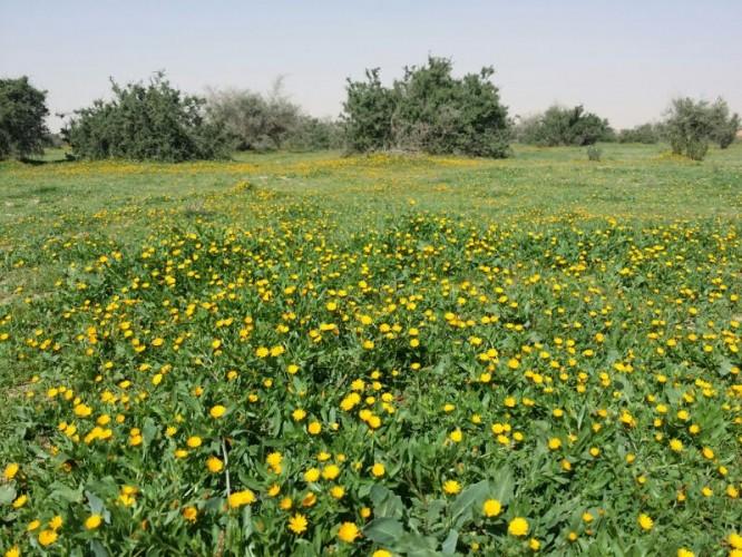 Photo of روضة التنهات 1441 مملكة الجمال